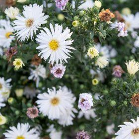 Le pouvoir des fleurs
